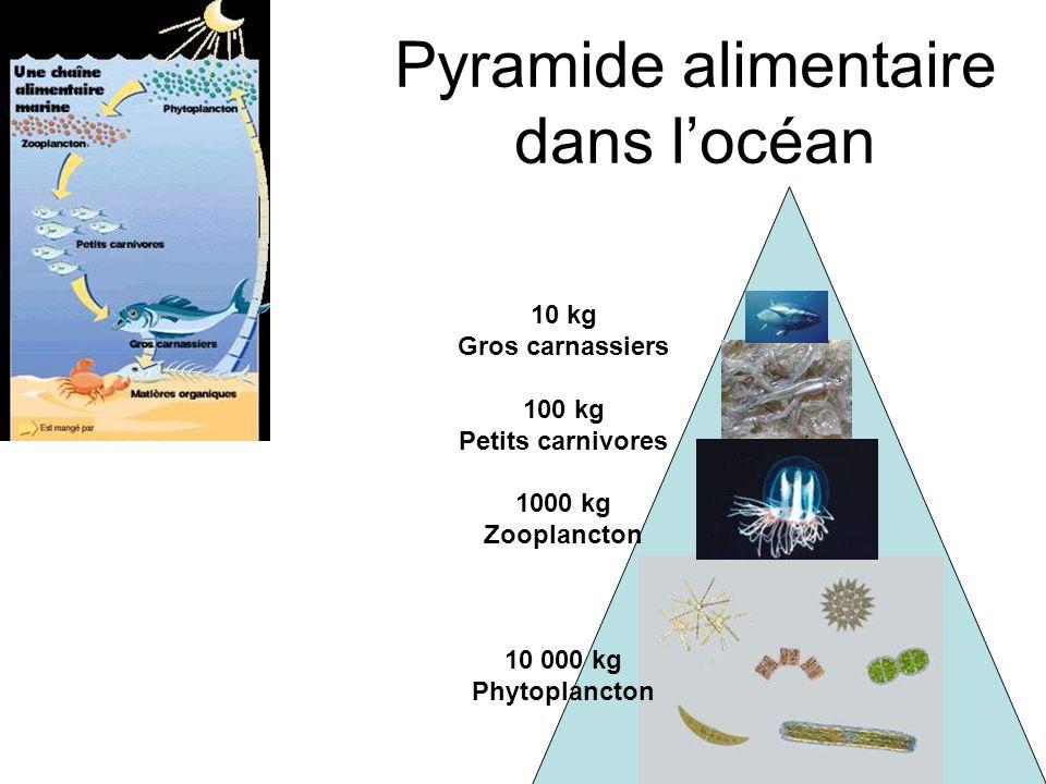 Pyramide alimentaire dans l'océan