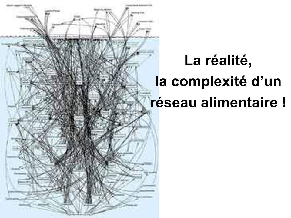 La réalité, la complexité d'un réseau alimentaire !