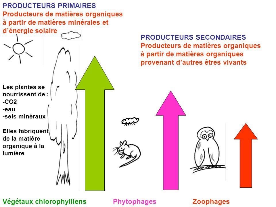 PRODUCTEURS PRIMAIRES Producteurs de matières organiques