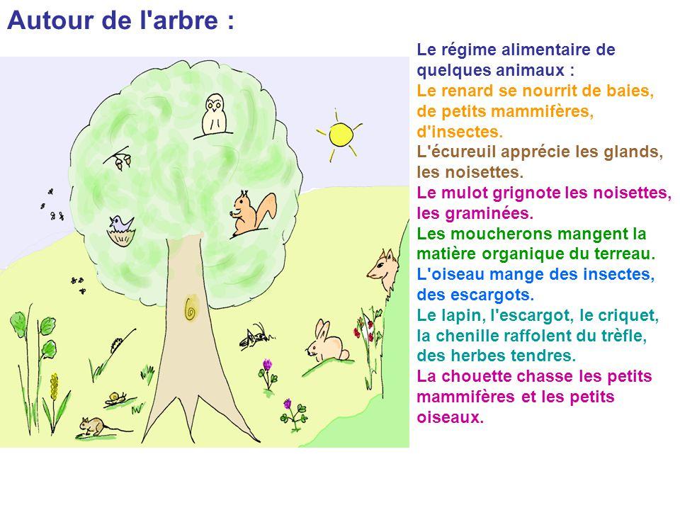 Autour de l arbre : Le régime alimentaire de quelques animaux :