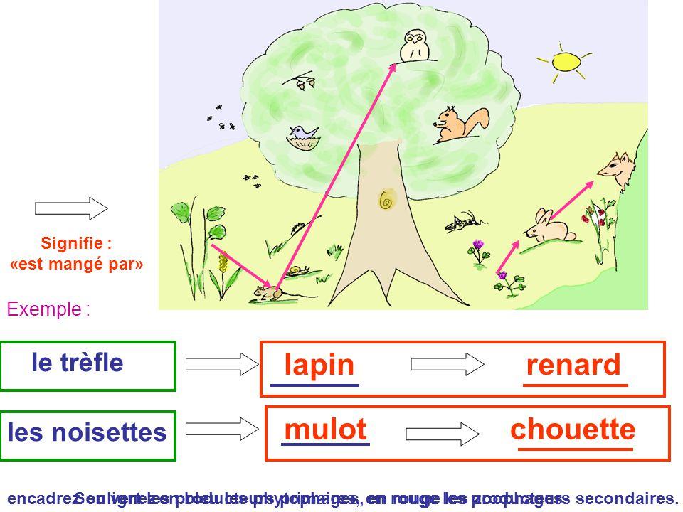 lapin renard mulot chouette le trèfle les noisettes Exemple :