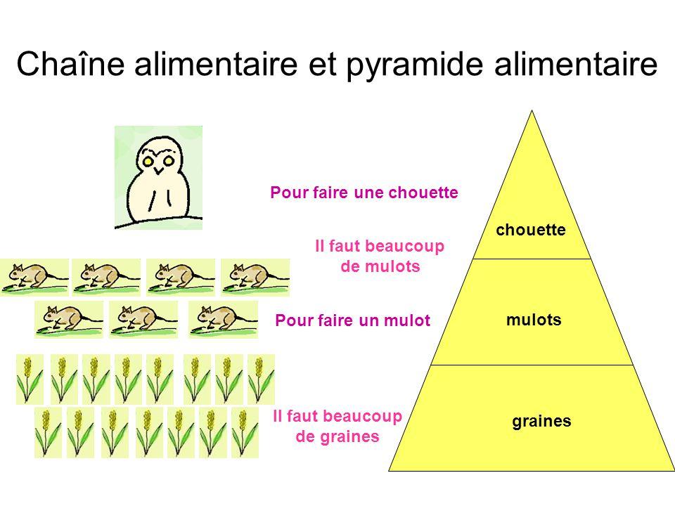 Chaîne alimentaire et pyramide alimentaire