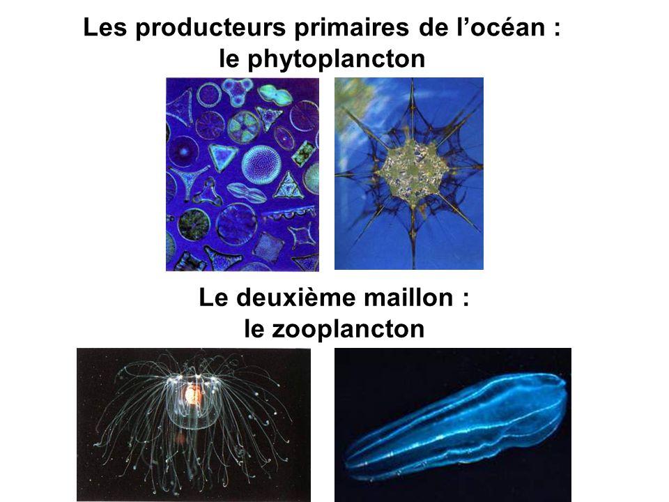 Les producteurs primaires de l'océan : le phytoplancton