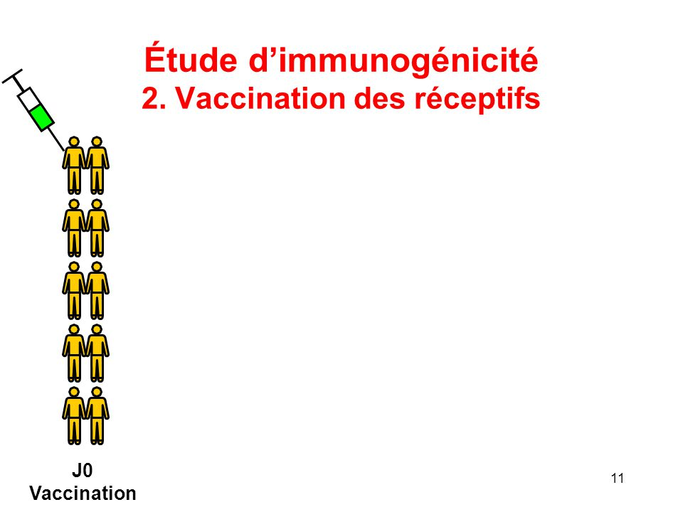 Étude d'immunogénicité 2. Vaccination des réceptifs