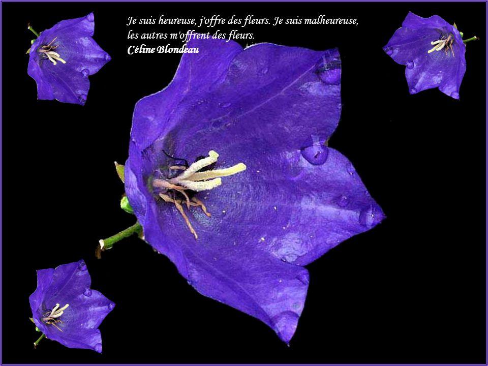 Pens es propos des fleurs ppt t l charger for Offre des fleurs