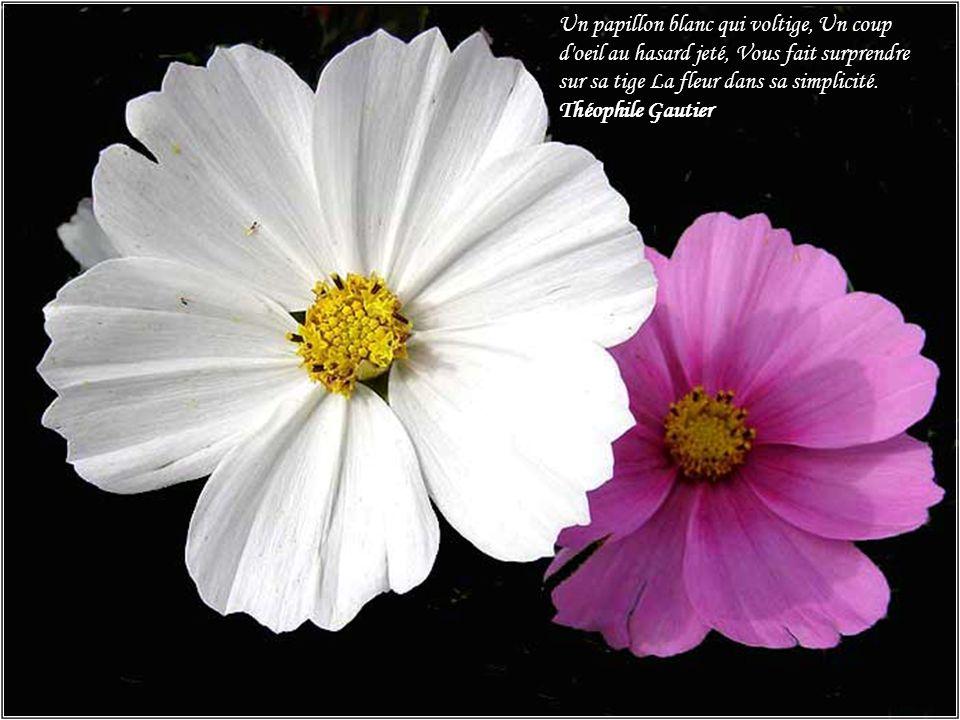 Pens es propos des fleurs ppt t l charger - Oeil qui gonfle d un coup ...