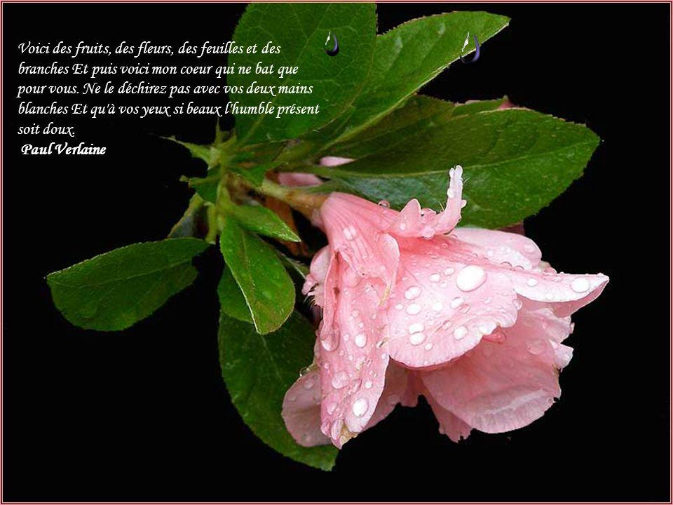 Pens es propos des fleurs ppt t l charger for Mon amaryllis ne fait que des feuilles