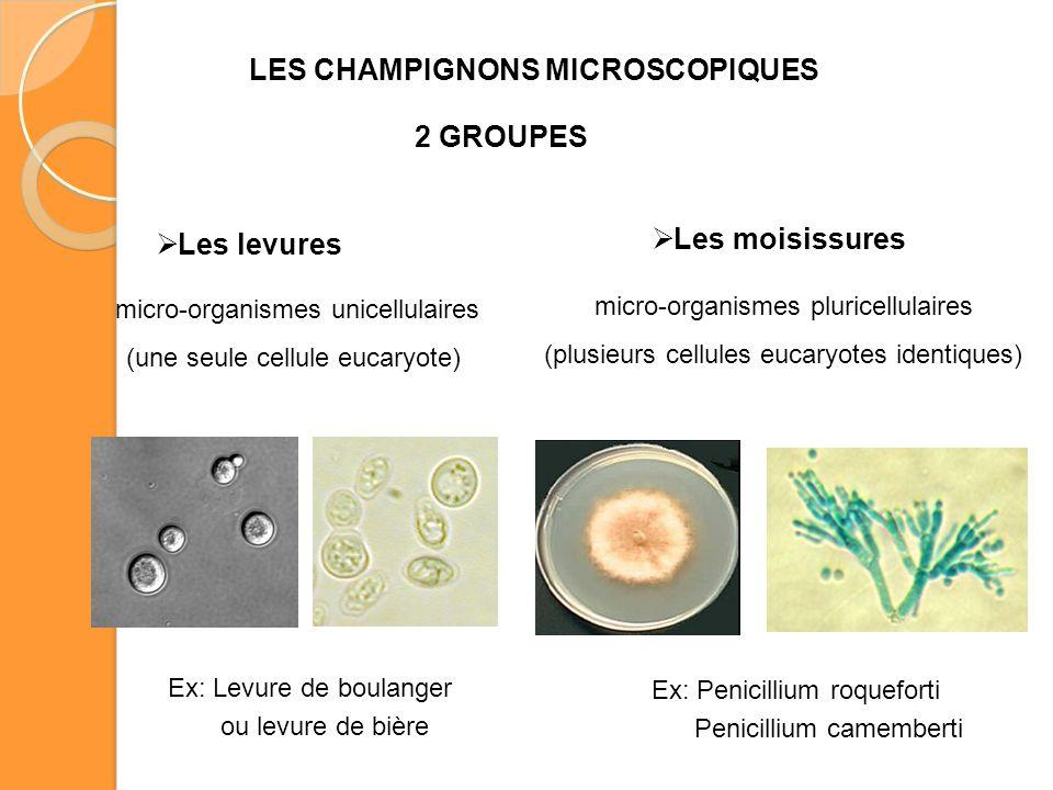 LES CHAMPIGNONS MICROSCOPIQUES