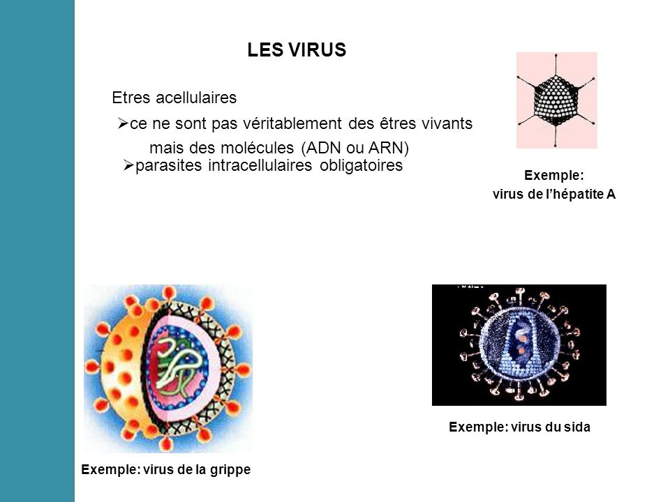 Exemple: virus de la grippe