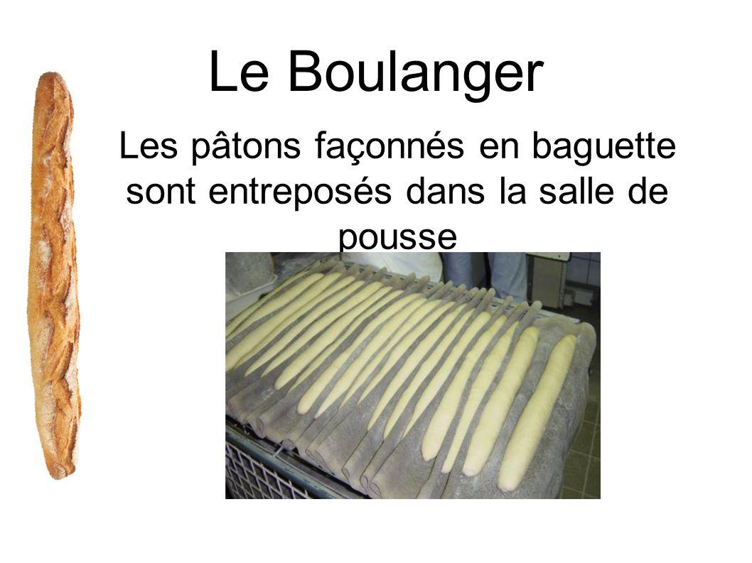 Le Boulanger Les pâtons façonnés en baguette sont entreposés dans la salle de pousse