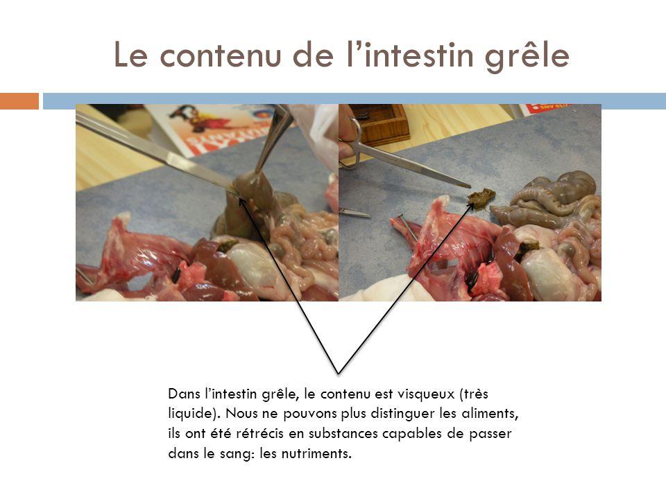 Le contenu de l'intestin grêle