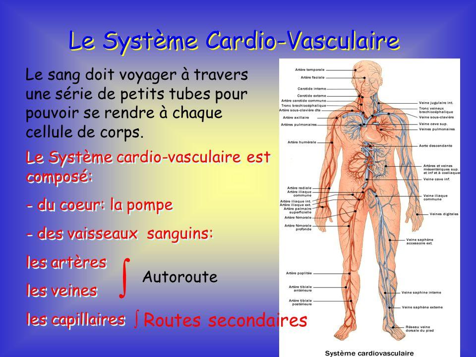Le syst me cardio vasculaire ppt t l charger - Comment se couper les veines pour mourir ...