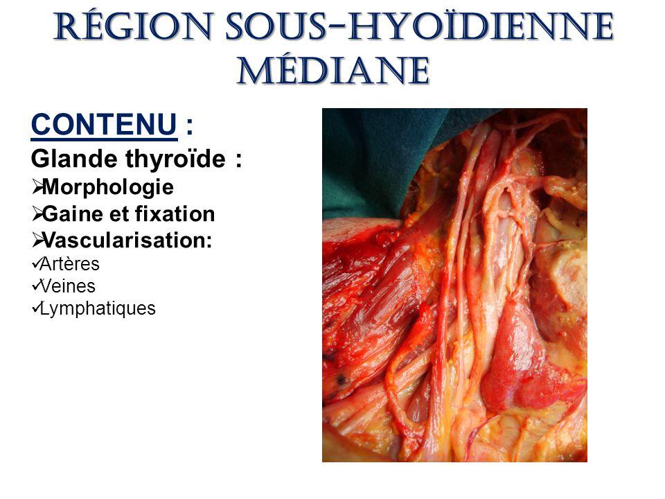anatomie de la thyroide pdf