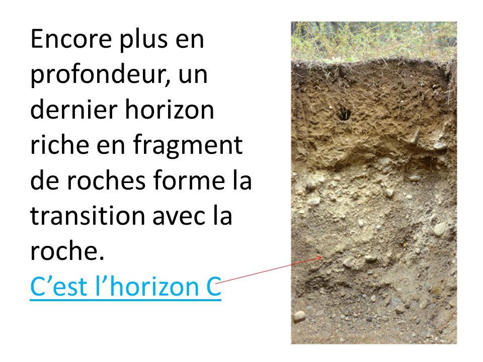 Encore plus en profondeur, un dernier horizon riche en fragment de roches forme la transition avec la roche.