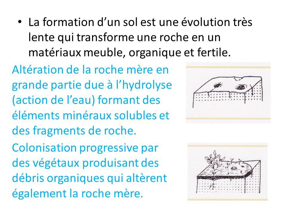 La formation d'un sol est une évolution très lente qui transforme une roche en un matériaux meuble, organique et fertile.