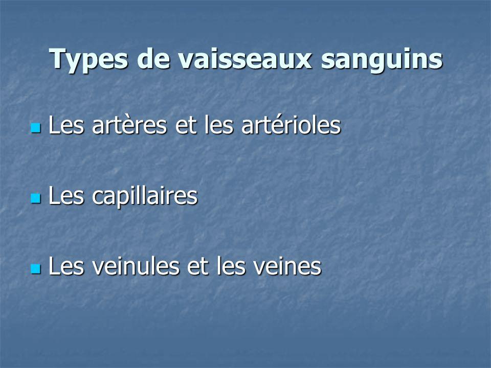 Types de vaisseaux sanguins