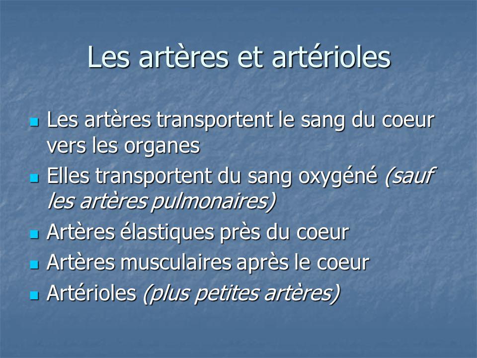 Les artères et artérioles