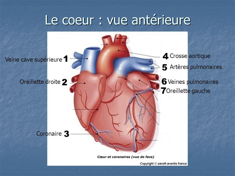 Le coeur : vue antérieure