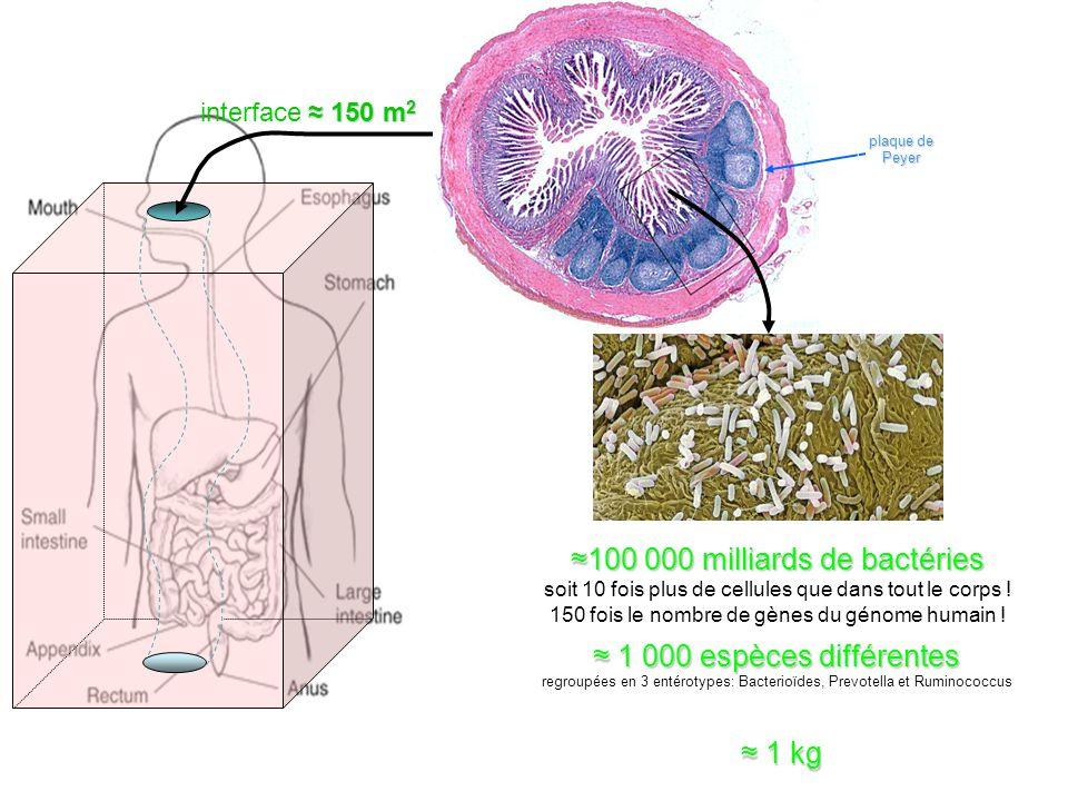 ≈100 000 milliards de bactéries