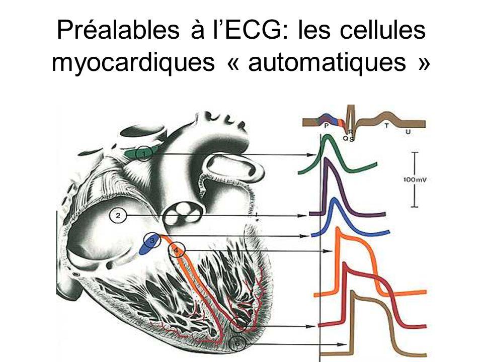 Préalables à l'ECG: les cellules myocardiques « automatiques »