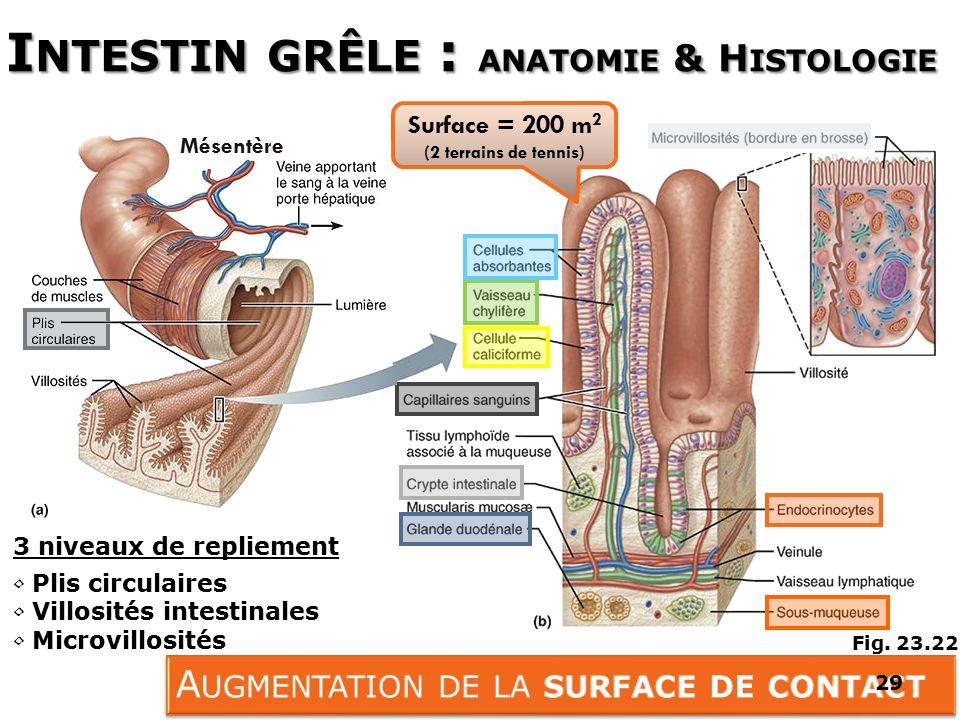 Berühmt Menschliche Anatomie Histologie Galerie - Menschliche ...