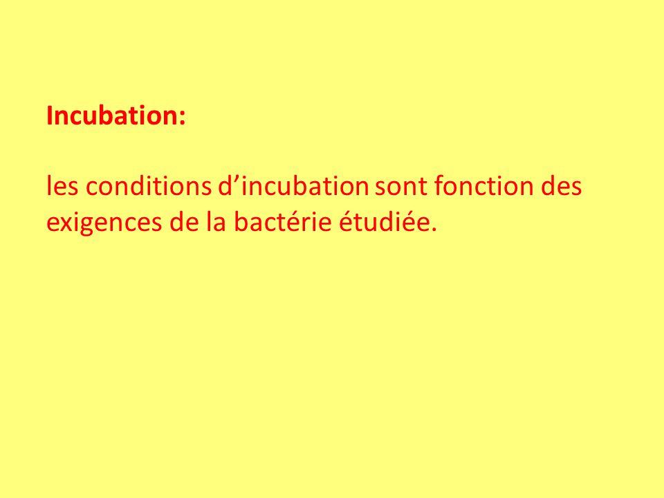 Incubation: les conditions d'incubation sont fonction des exigences de la bactérie étudiée.