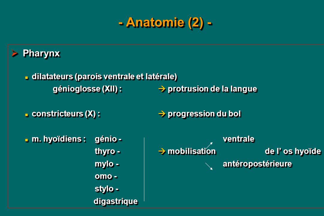 Ziemlich Anatomie Der Zielseite Galerie - Anatomie Von Menschlichen ...