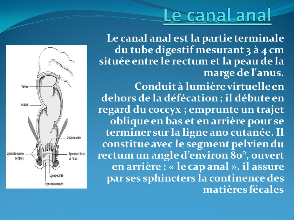 Le canal anal Le canal anal est la partie terminale du tube digestif mesurant 3 à 4 cm située entre le rectum et la peau de la marge de l anus.