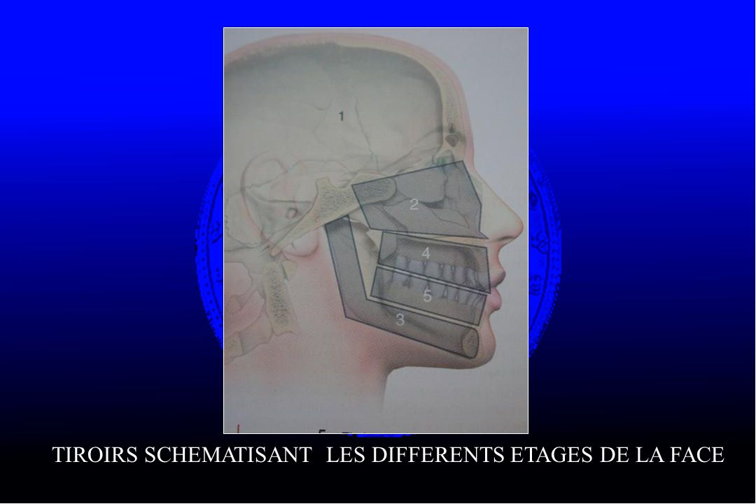 TIROIRS SCHEMATISANT LES DIFFERENTS ETAGES DE LA FACE