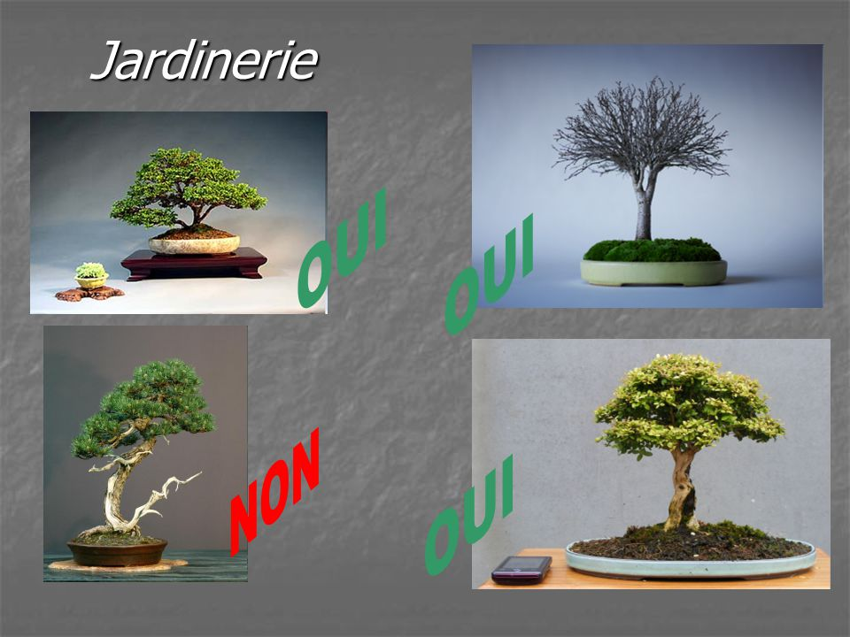 Gerer sa collection daniel heckel mars ppt video online for Jardinerie online