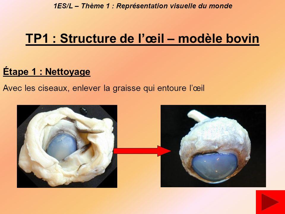 TP1 : Structure de l'œil – modèle bovin