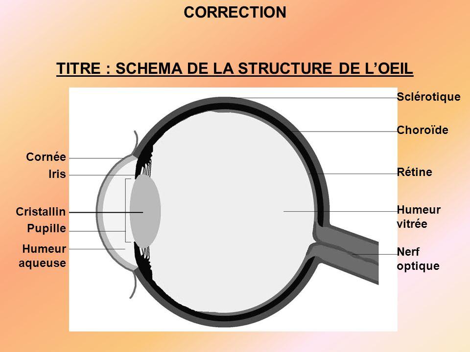 TITRE : SCHEMA DE LA STRUCTURE DE L'OEIL