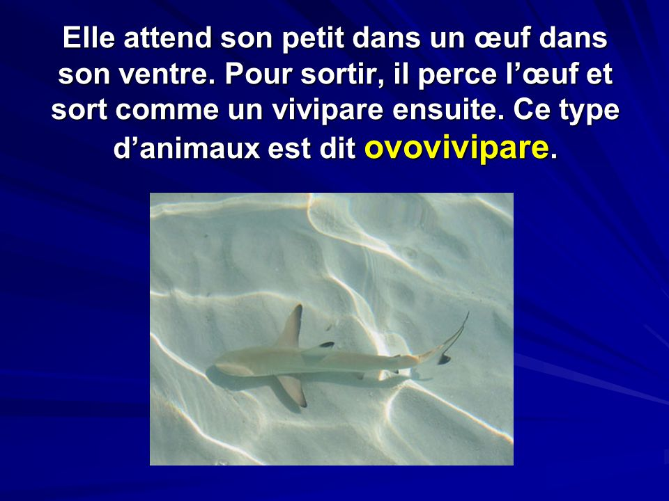 son animaux mp3
