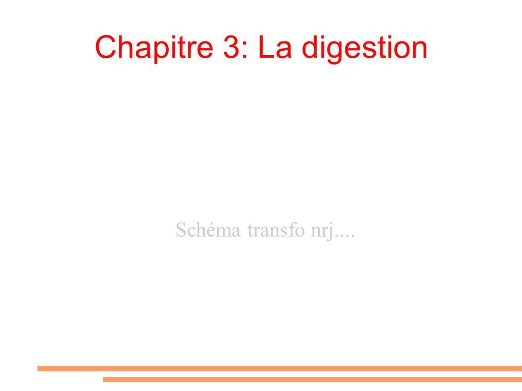 Chapitre 3: La digestion