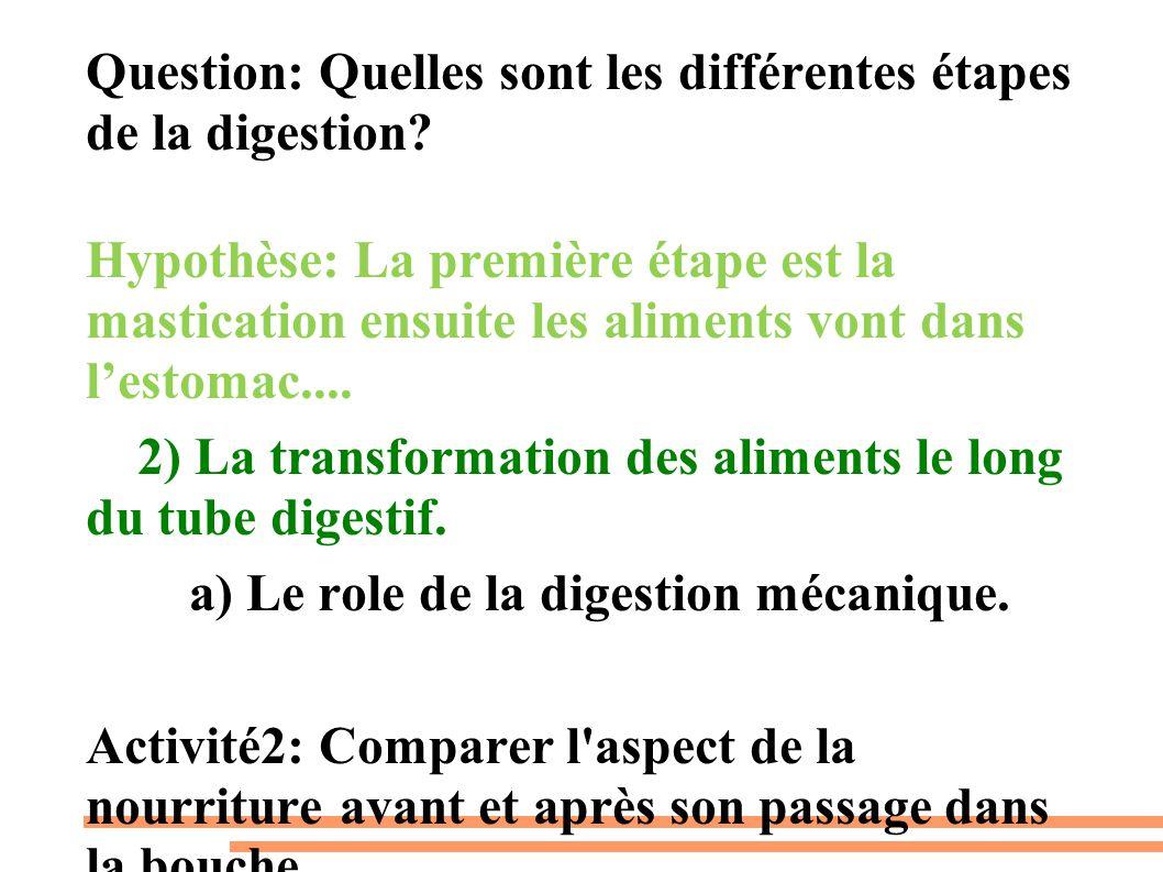 Question: Quelles sont les différentes étapes de la digestion