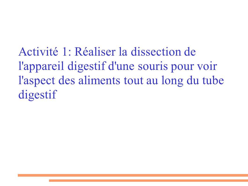Activité 1: Réaliser la dissection de l appareil digestif d une souris pour voir l aspect des aliments tout au long du tube digestif