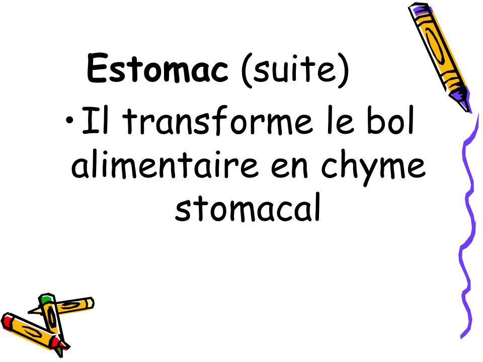 Il transforme le bol alimentaire en chyme stomacal