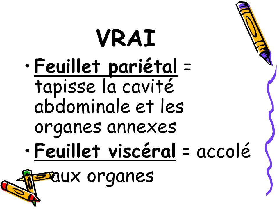 VRAI Feuillet pariétal = tapisse la cavité abdominale et les organes annexes. Feuillet viscéral = accolé.