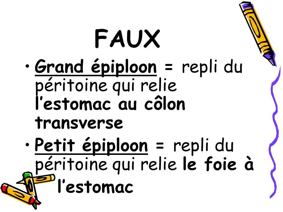 FAUX Grand épiploon = repli du péritoine qui relie l'estomac au côlon transverse. Petit épiploon = repli du péritoine qui relie le foie à.