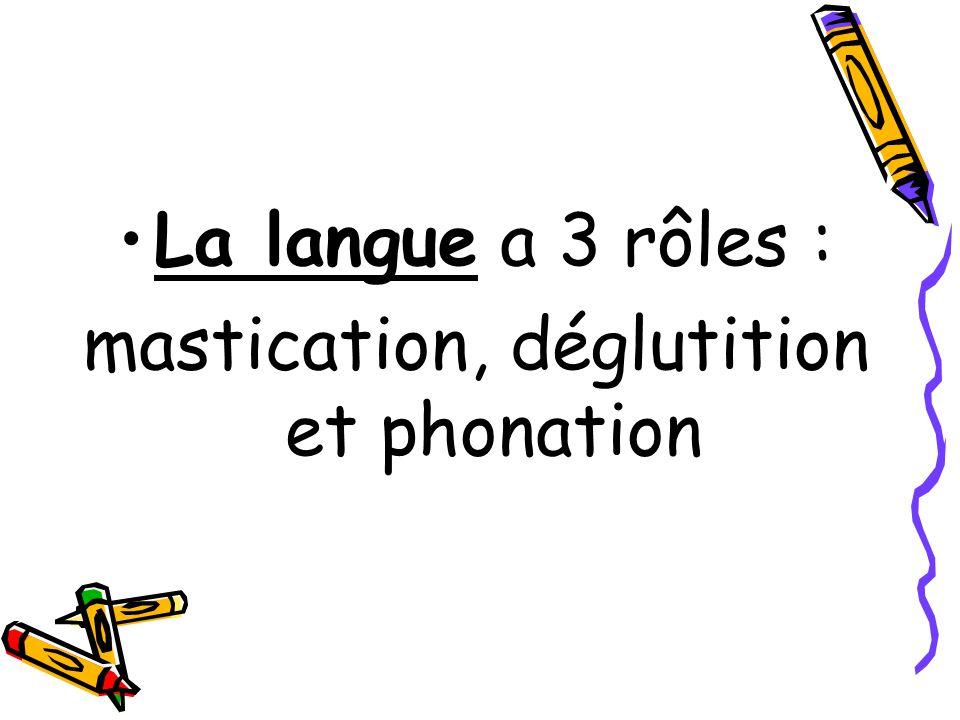 mastication, déglutition et phonation