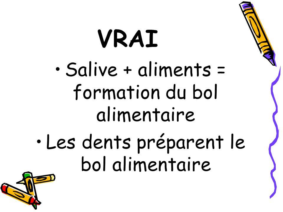 VRAI Salive + aliments = formation du bol alimentaire