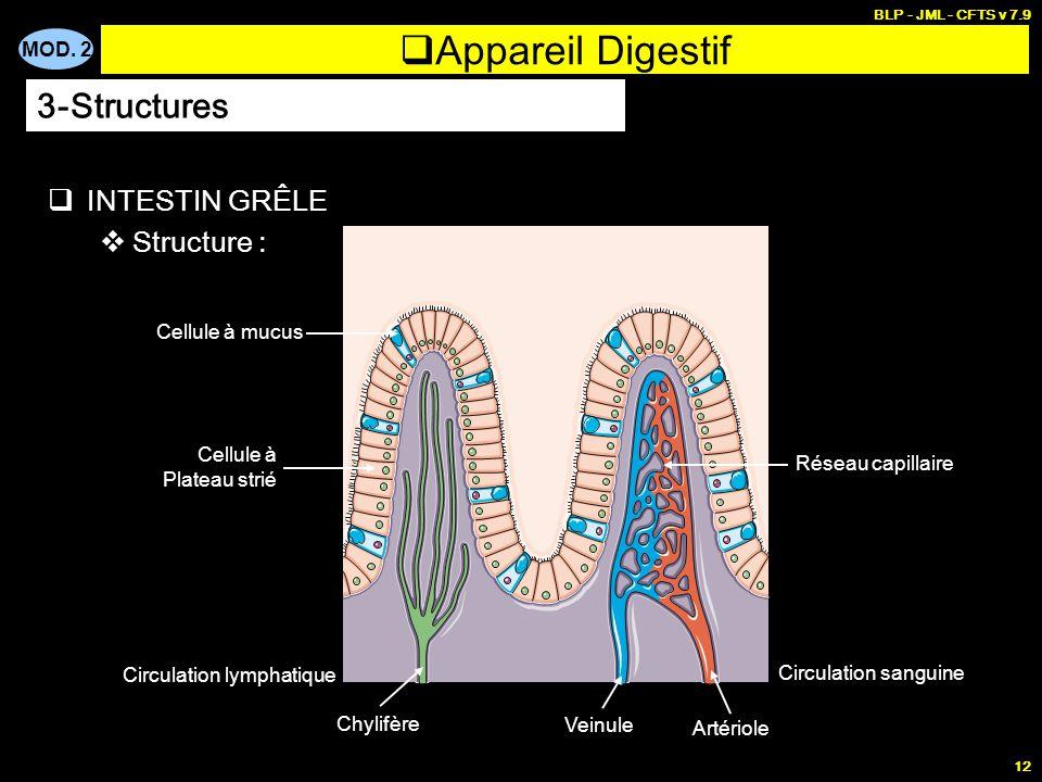 Appareil Digestif 3-Structures INTESTIN GRÊLE Structure :