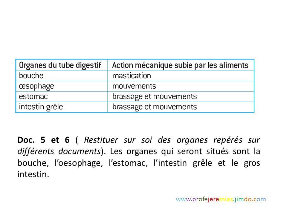 Doc. 5 et 6 ( Restituer sur soi des organes repérés sur différents documents). Les organes qui seront situés sont la bouche, l'oesophage, l'estomac, l'intestin grêle et le gros intestin.