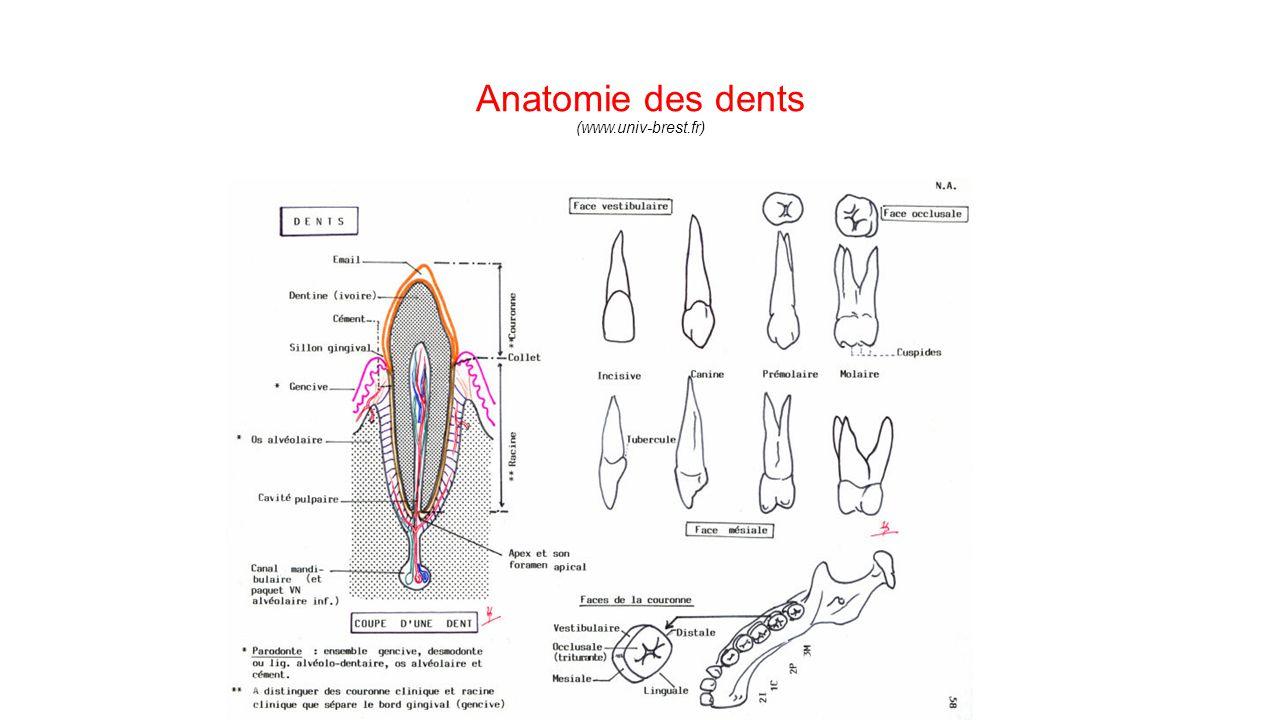 Wunderbar Welcher Teil Der Weiblichen Anatomie Reime Mit Dolores ...