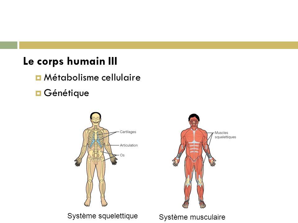 Le corps humain III Métabolisme cellulaire Génétique