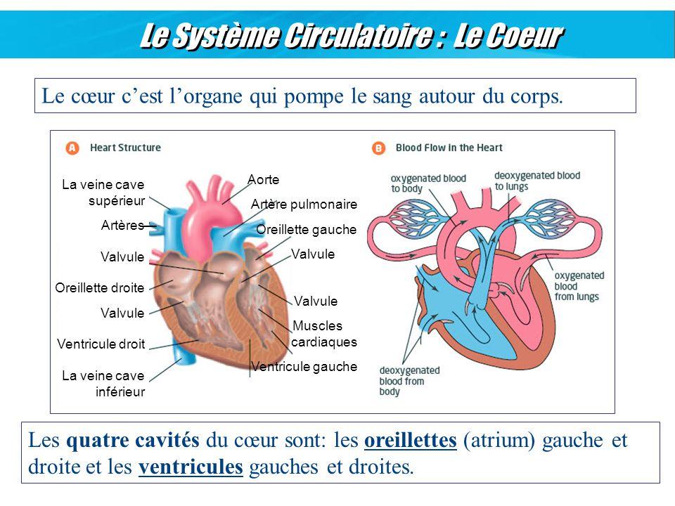 Les organes et syst mes ppt video online t l charger for Atrium coeur
