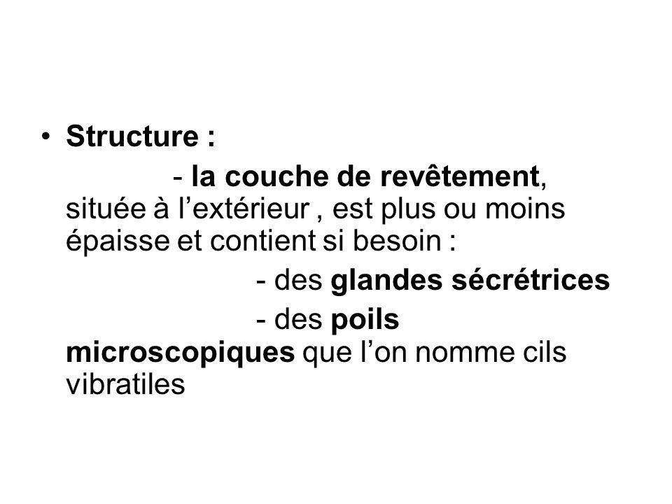 Structure : - la couche de revêtement, située à l'extérieur , est plus ou moins épaisse et contient si besoin :