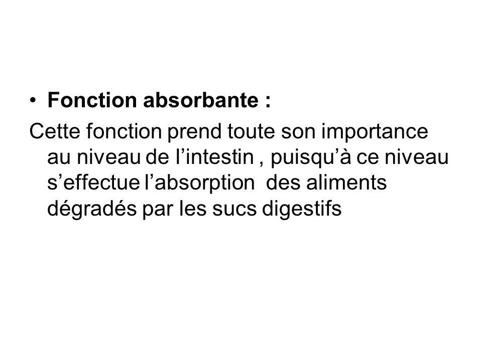 Fonction absorbante :