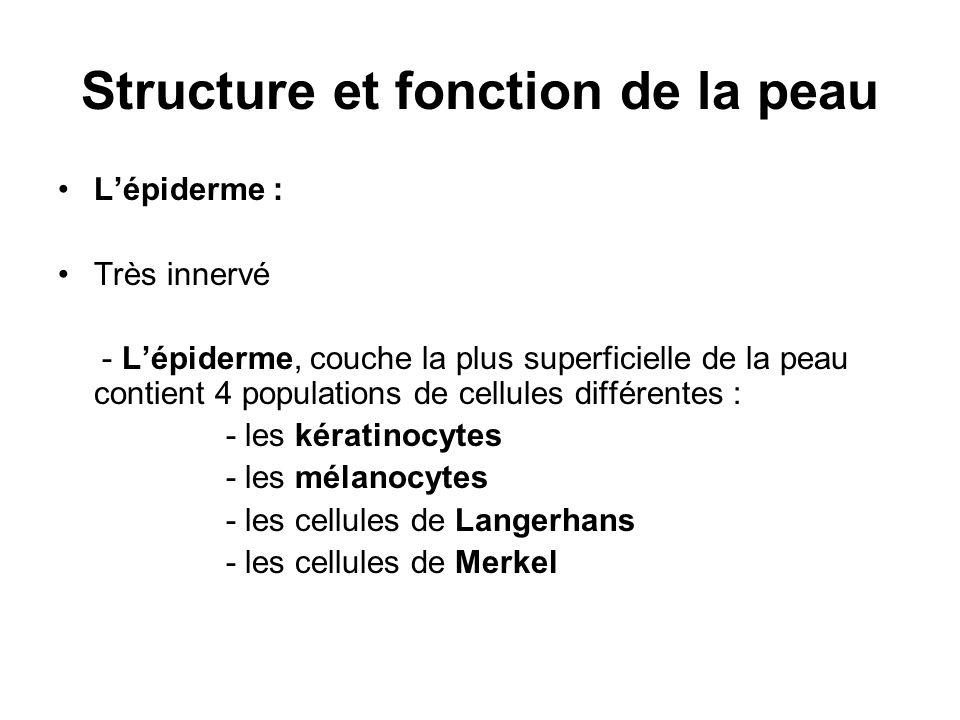 Structure et fonction de la peau