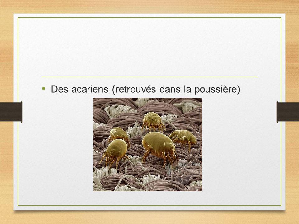Des acariens (retrouvés dans la poussière)